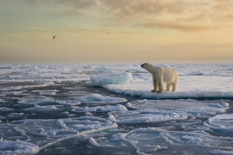 Znany fotograf radzi, jak robić najlepsze zdjęcia dzikiej przyrody -